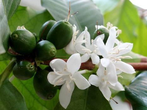 Купить кофе в зернах пермь